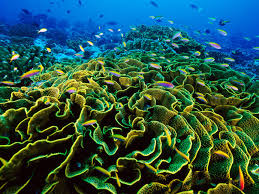 Coral Reefs Of The World Map by Phoenix Islands World Heritage Site National Geographic