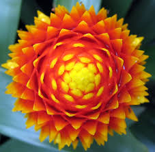 some kind of flower in sheffield u0027s winter garden photo page