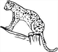 2014 cheetah coloring sheets coloring