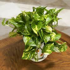 house plants for beginners