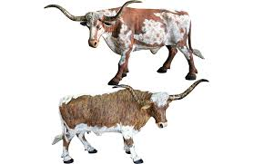 Texas Longhorn Home Decor Lampasas Store Furniture Home U0026 Outdoor Decor Western Clothing