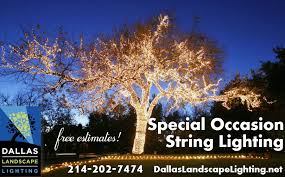 Dallas Landscape Lighting Light Installation In Dallas Dallas Landscape Lighting