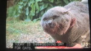 Is Thanksgiving Today Today Is Thanksgiving Day For Cats