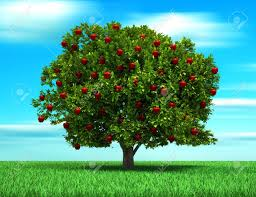 fruit tree stock photos u0026 pictures royalty free fruit tree images