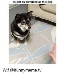 Confused Dog Meme - 25 best memes about dog dog memes