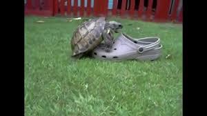 Turtle Memes - dank turtle meme youtube