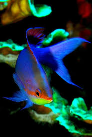 54 best fish images on pinterest beautiful board and feelings