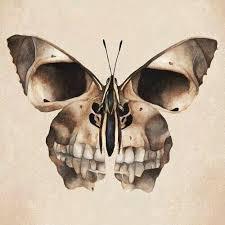 the 25 best skull butterfly ideas on skull
