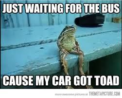 Funny Frog Meme - sitting frog the meta picture
