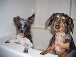 Dogs In The Bathtub Your Silly Dog Photos Ii Today U003e Pets Today Com