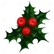holly branch on white background christmas symbol stock photo