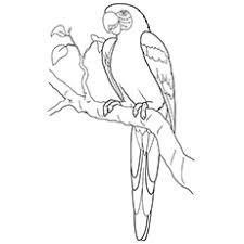 handy manny tools coloring pages top 10 macaw coloring pages your toddler will love