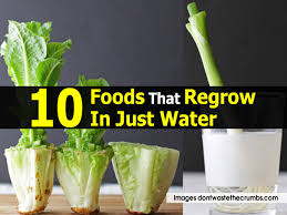 Vegetables You Can Regrow by 10 Foods That Regrow In Just Water