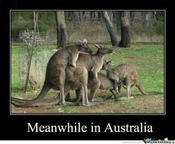 Funny Australia Day Memes - the best australian memes part 1 published by terravista on day
