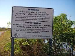 lake apopka gator u2013 florida u0027s natural wonders