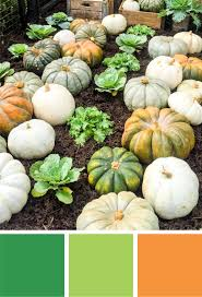 light green color fall color palette orange and green heirloom pumpkins merriment