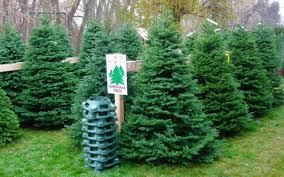 noble christmas tree ksl deals 6 7 noble fir christmas tree with delivery