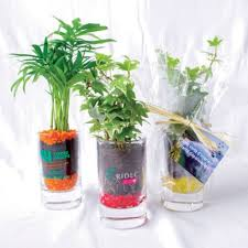 plante d駱olluante bureau mini plante dépolluante marquage publicitaire