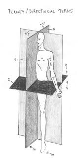 Planes And Anatomical Directions Worksheet Answers Planes Gif