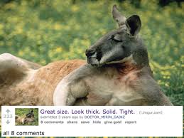 Kangaroo Meme - swole kangaroo thick solid tight know your meme