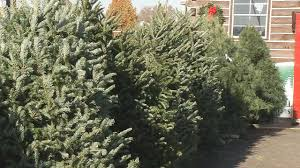 national shortage driving up prices of live christmas trees wdrb