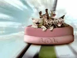 happy birthday funny cats style free happy birthday ecards