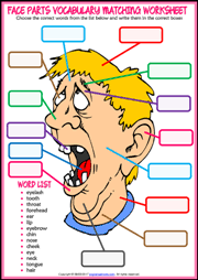 face parts esl printable worksheets and exercises