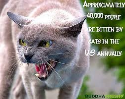 Cat Facts Meme - fancy cat facts meme textures salon wallpaper site wallpaper site