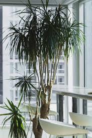 the 25 best low light plants ideas on pinterest indoor plants