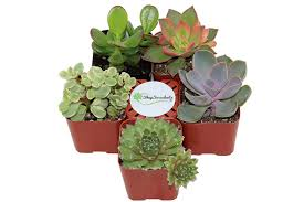 plants that don t need light 100 desk plants that don t need sunlight succulents u0026
