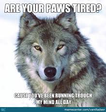 Wolf Meme - meme wolf 28 images insanity wolf meme them funny here are 10 of