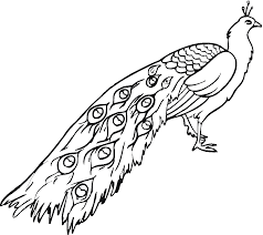 zentangle peacock coloring page vector tribal decorative free