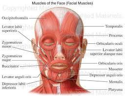 Anatomy And Physiology Of Speech 56 Best Medical Speech Language Pathology Images On Pinterest