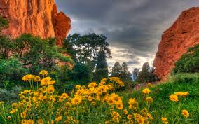 spring flowers in the garden of the gods in colorado desktop