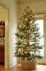 sparse christmas trees natural growth christmas tree for the