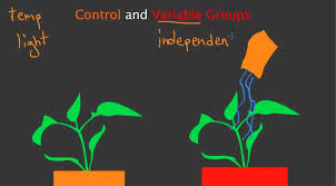 control and variable groups youtube