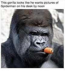 Spiderman Meme Desk - this gorilla looks like he wants pictures of spiderman on his desk