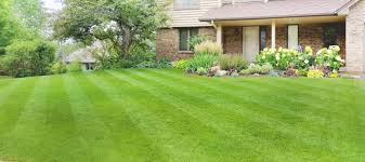 lawn seeding solutions in mn rainbow lawncare