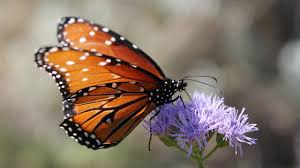 what do butterflies eat youtube