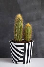 tell diy fabric wrapped pot wraps fabrics and cacti