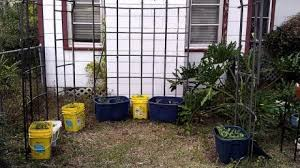 Container Gardening For Food - filthy hard work container gardening for food and not profit