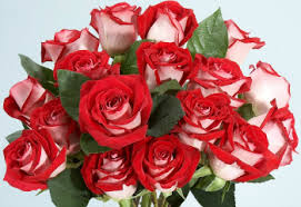 roses colors color meanings choose the right color for your message