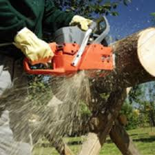 cheap trees 17 photos tree services 3705 sunset ave