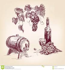 wine vector wine collection hand drawn vector illustration stock photo image