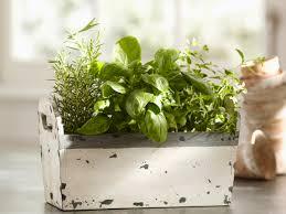 Herb Garden Winter - 6 indoor herb growing kits to keep you growing through winter
