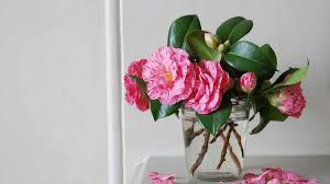 plants native to japan kanjiro camellia monrovia kanjiro camellia