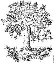 322 u2014apple tree pyrus malus c s