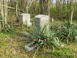 Trees Plants And Flowers - a grave interest serene and evergreen cemeteries allowing