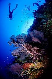 Oklahoma Snorkeling images Scuba diving reminds me of my oklahoma ok ma guys on our jpg