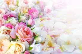 roses flowers roses flowers background stock photo rvika 38910647